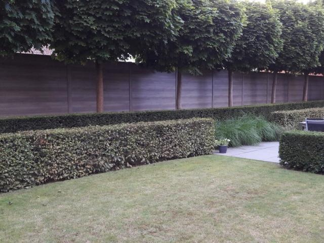 BEAUFOR kunststof tuinschermen in combinatie met bomen